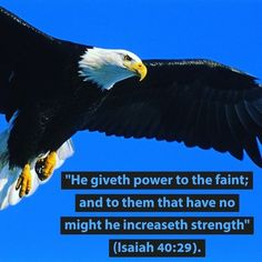 Youth Ministry, Ministry Ideas, Bible Promises, Bible Verses, Scriptures, Old Testament, Jesus Saves, Bald Eagle, Blessed