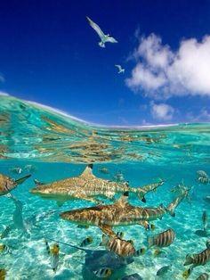 Shark Lagoon in Bora Bora