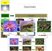 Food Chain Cards & Charts