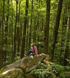 Amazing Health Benefits From Forests - scientific proof that being in the forest: boosts immune system, decreases ADHD, increases energy, improves sleep....   ...