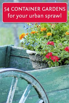 :: Urban gardening ideas...54 DIY container gardens :: Our bedrock may makes this a better choice than in-soil planting.