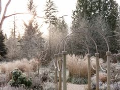 Frozen beauty and why I love grasses.