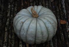 ~*- Gresskar -*~ (Amariel of the Woodlands) My blue fairytale pumpkin! October 2014, Pumpkins, Fairytale, Woodland, Gardening, Blue, Blogging, Fairy Tail, Fairytail
