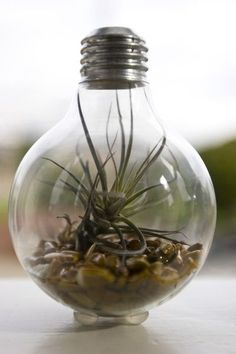 Light bulb terrarium. Neat idea, but I don't know how DIY it is (site doesn't say it is, but I was daydreaming) because of all of the toxic stuff that lives inisde real light bulbs.