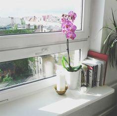 Hoa lan nở bền kéo dài cả tháng, có thể tươi lâu dù được đặt ở trong nhà. Vào những ngày mùa đông, thời tiết u ám và ít loại hoa nở, bạn sẽ cảm thấy vui vẻ hơn nhờ có bình hoa lan.