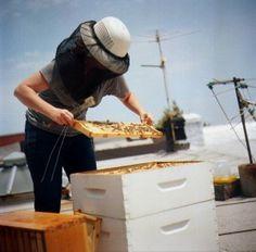 Recorded beekeeping class by Meg Paska (Brooklyn Homesteader). Bee Party, My Honey, Honey Bees, Busy Bee, Bees Knees, Bee Keeping, Brooklyn, Anatomy, Presentation