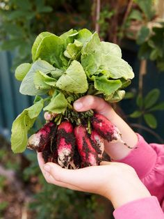 Growing Radishes and Runner Beans in Pots - on HGTV