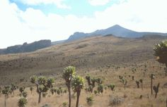 The Best Treks in Africa from Kilimanjaro to the Atlas Mountains - Mount Elgon is a huge extinct volcano that straddles the border between Kenya and Uganda. There are 5 major peaks, the two highest are Wagagai (4,321m) in Uganda and Sudek (4,302m) in Kenya. The caldera is one of the largest in the world. The routes offer challenging hikes along gorges, waterfalls and caves.  December - March is the best time to hike. You must hire an official guide. In Uganda, check in at Mbale for…