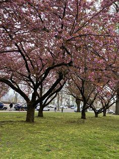 Seasons, Spring, Plants, Seasons Of The Year, Plant, Planets