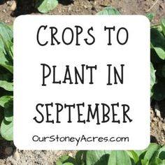 October Planting Guide 6 crops you SHOULD plant in October Our Stoney Acres