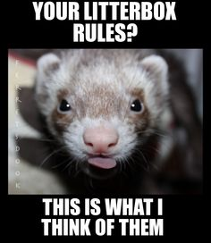 Litterbox Rules Pppffffggghhhhtttt!!! So true!