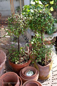 Ruelille29 Topiary Garden, Indoor Garden, Indoor Plants, Outdoor Gardens, Modern Gardens, Japanese Gardens, Small Gardens, Garden Table, Garden Pots