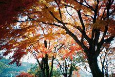 greekg0ds:    Autumn @Shizuoka Japan by ogino.taro on Flickr.