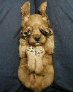 puppies! cute-animals #wild animals