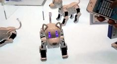 Roboter Hund i-SODOG – Haustier mit Batterien hört aufs Wort