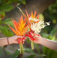 birds of paradise bouquet - Google Search
