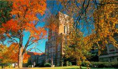 UT is prettiest in the fall :)