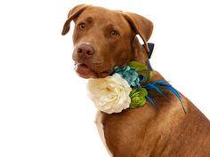 wedding dog collar - floral peacock colors