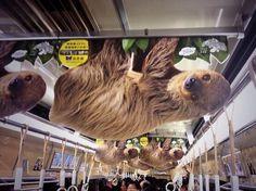 Tumblr: nsx:  電車の中吊り広告 攻めてる中吊り広告で有名な大阪の水族館海遊館の広告2014年実物大ナマケモノこっち見てるし可愛いぎるでしょ http://pic.twitter.com/SSeYCVhZ9J   Bellissima (@BellissM) April 5 2016