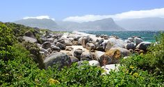 Boulders beach 2 through the eyes of Alan_Kolnik Giant Boulder, Boulder Beach, African Penguin, African Love, Places Of Interest, Cape Town, Bouldering, Continents, South Africa