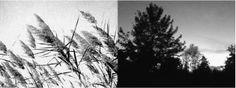 Madreterra   Immagini ispiratrici   Canne al vento   Un albero familiare.
