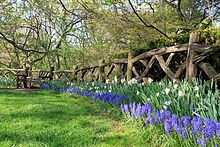 Shakespeare garden - Central Park