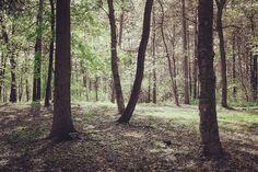 #lackoj #forrest #trees #outdoors #fujifilmx100s #brezina #trencin #slovakia