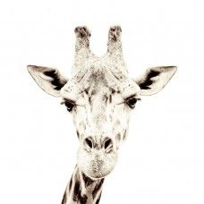 Groovy Magnets - Magneetbehang met Giraffe 127 x 265cm