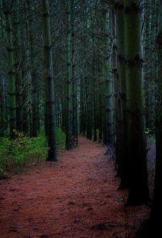 ✮ Trail through the Pines