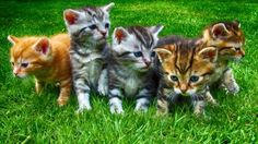 Kittens – Sunday's Free Daily Jigsaw Puzzle