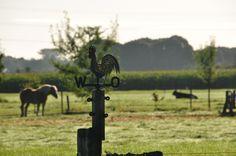 's morgens na een heerlijk ontbijt in de boerderijkeuken, kijken hoe staat de weerhaan, waar komt de wind vandaan vandaag