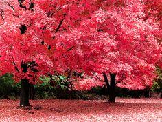 Autumn, Bangor, Maine