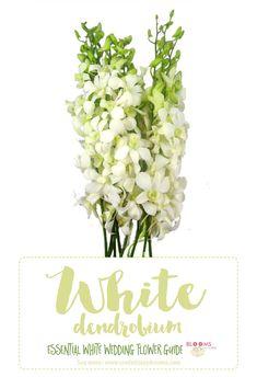 92 best white wedding flower inspiration belle fiori florist images essential white wedding flower guide names types pics mightylinksfo
