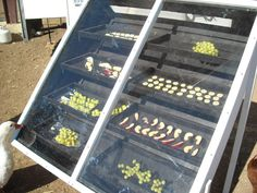DIY solar food dehydrator. Like this design, as I read that foods dried in sunlight were much more nutritious than foods dried in the dark.