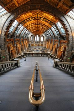 London natural history museum. Must be taken from in front of the slice of giant redwood