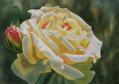 Yellow Rose With Bud by Sharon Freeman - Yellow Rose With Bud Painting - Yellow Rose With Bud Fine Art Prints and Posters for Sale Art Floral, Floral Artwork, Watercolor Rose, Watercolor Paper, Watercolor Paintings, Rose Art, Flowers Nature, Yellow Roses, Paintings For Sale