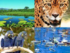 Pantanal http://www.avonsun.com.br/super-dicas/_conteudo/imagem/super_dicas/2010/10/visite-o-pantanal.jpg