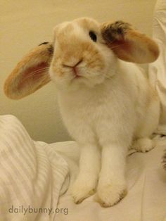 Bunny is ready for takeoff! - June 10, 2014