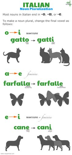 Italian pluralization patterns, Italian plurals: o to i, gatto to gatti; a to e, farfalla to farfalle, e to i, cane to cani; www.viaoptimae.... #learnitalian