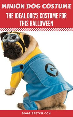 If you are the proud owner of a small pug, poodle, or toy-dog, this is the costume for them this Halloween. The Minion has become one of the most costumes for humans, now you can dress your small up with the same matching costume this year. Minion Dog Costume, Best Dog Halloween Costumes, Pet Costumes For Dogs, Cute Dog Costumes, Minion Dress, Costume Ideas, Happy Halloween, Online Pet Supplies, Dog Supplies