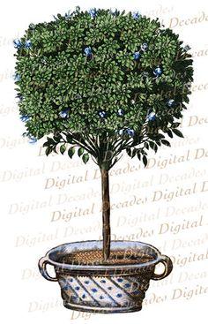 vintage topiary