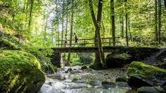 These 10 panorama hikes of varying lengths and levels of difficulty can be undertaken in the course of unforgettable day trips from Zurich. Day Trips, To Go, Hiking, Places, Switzerland, Training, Traveling, Things To Do, Viajes