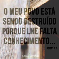 Nova Semente - Frases da Bíblia - Versículos -Deus - Oséias 4:6