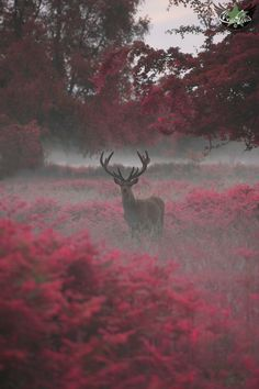 "tulipnight: "" another stag, another planet by Max Ellis """