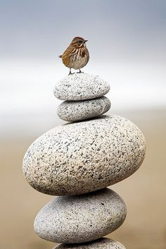 A small bird stands on a cairn, a pile of round stones, at Shi Shi Beach, Olympic National Park, Washington
