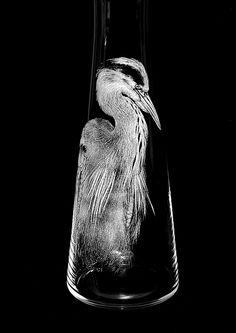 Heron Carafe