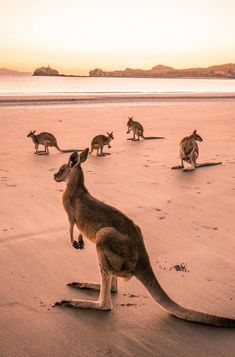 Queensland wildlife is second to none. Head to these beautiful spots and you're almost guranteed to spot something in it's natural habitat. The Places Youll Go, Places To Go, Australian Animals, Travel Aesthetic, Australia Travel, Perth, Animal Photography, Animal Kingdom, Pet Birds