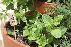 Wine Cork Herb Labels