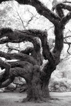 Angel Oak by aisha