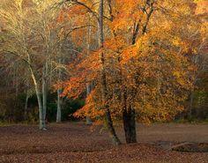 Landscape Photograph Rustic Woodland pasture CRISP by dorataya, $12.00